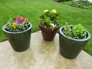 Patio Potted Pots Containers Plant Flowers Garden