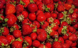 Growing Strawberries - Tweed Landscapes Gardening Services in Berwick upon Tweed
