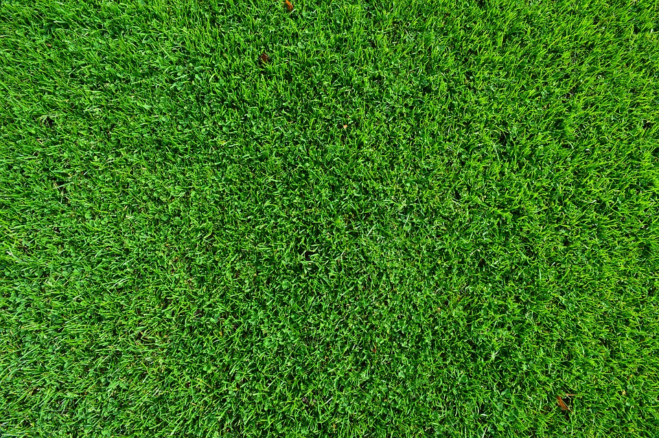 Turf - Looking after turf - Tweed Landscapes Gardening Services